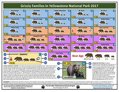 Bear Family Chart 2017