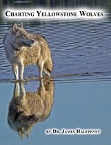 CHARTING YELLOWSTONE WOLVES