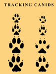 TRACKING CANIDS: TRACK AND TRAIL SYNOPSIS