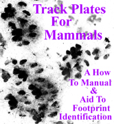 TRACK PLATES FOR MAMMALS